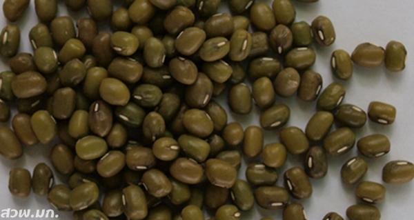 30.เมล็ดถั่วเขียวkps1-2