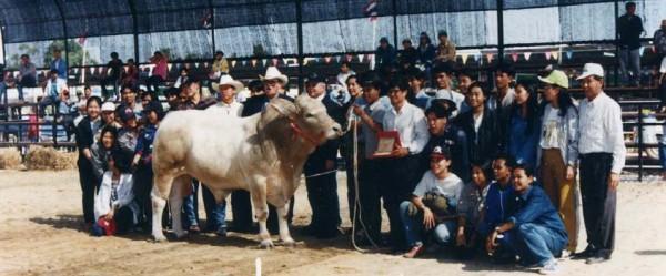 ขุนแผน โคเนื้อพันธุ์กำแพงแสน ได้รับรางวัลสุดยอดโคเนื้อแห่งปี (Super Grand Champion) ในงานแสดงเกษตรและอุตสาหกรรมโลก WORLDTECH'95 Thailand